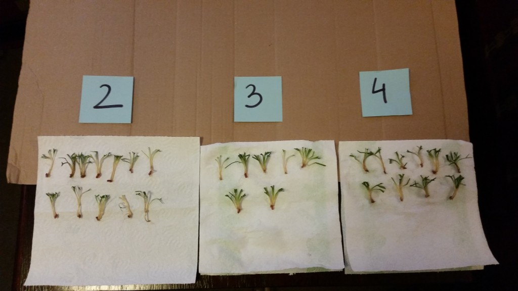 Badanie przezimowania pszenicy ozimej